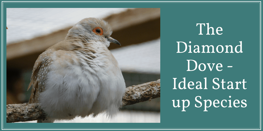 The Diamond Dove Ideal Start Up Species The Finch Weekly